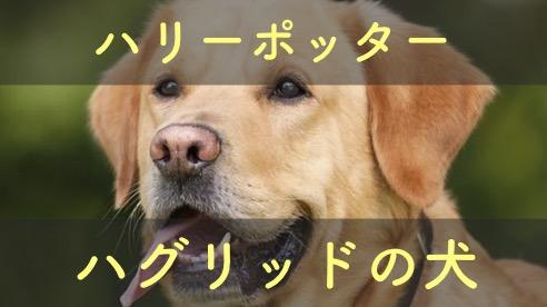 ハグリッドの犬と3つの頭の犬